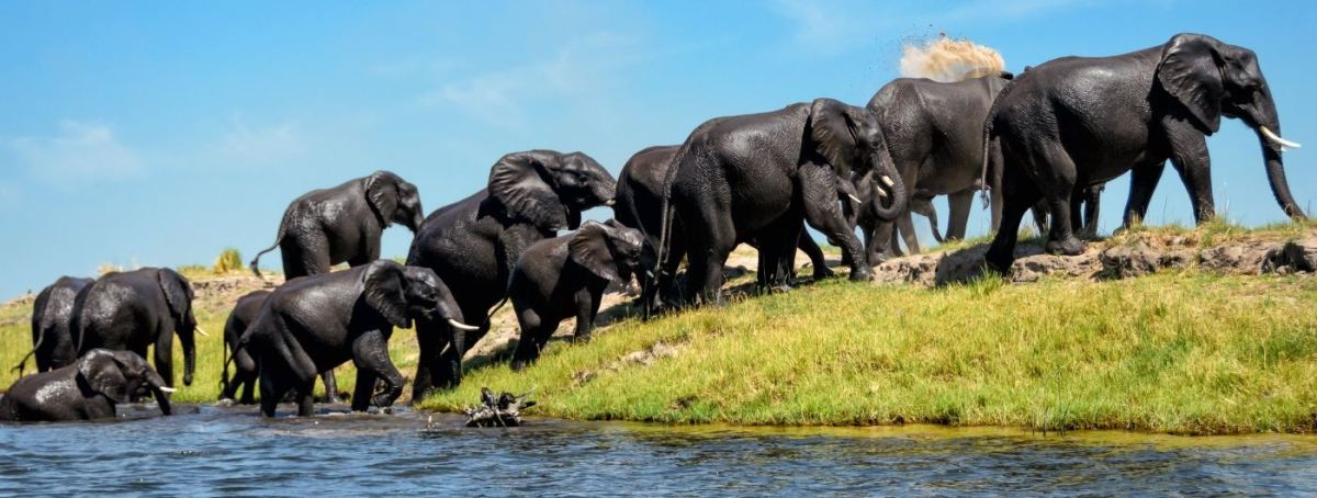 Top 10 things to do in Botswana