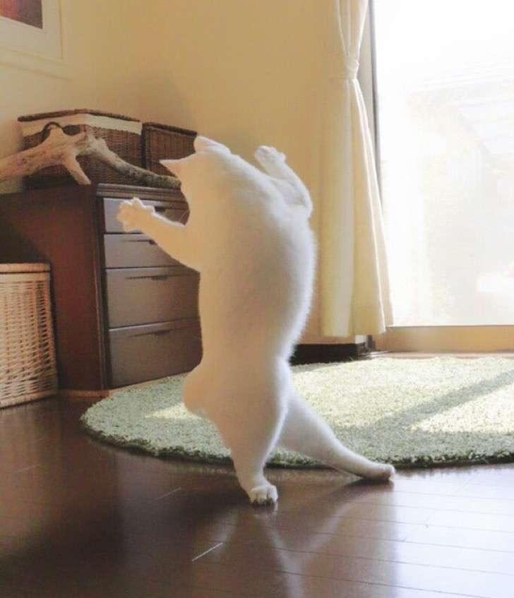 ballet-cat-japan-7 2