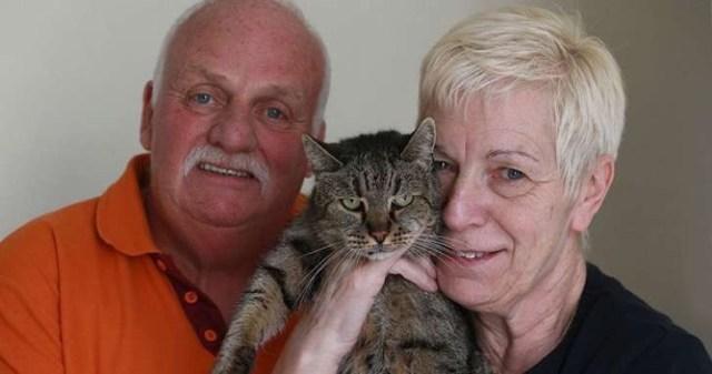 31-year-old-cat-nutmeg-3-2