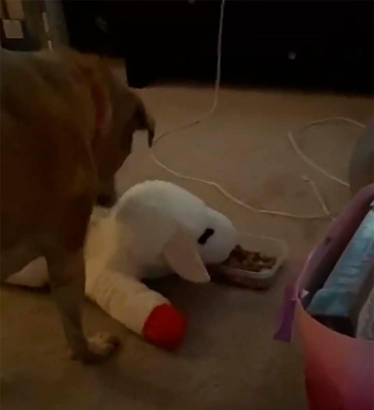 perro juguete 3 - Perro siempre se asegura de compartir su comida con su juguete favorito. Es un protector innato