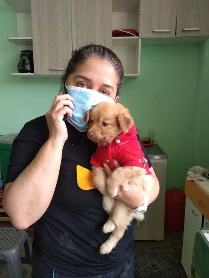 Captura de Pantalla 2020 10 01 a las 15.23.15 - Robaron más de USD $400 en insumos a un refugio animal de Perú. 64 mascotas resultarán afectadas
