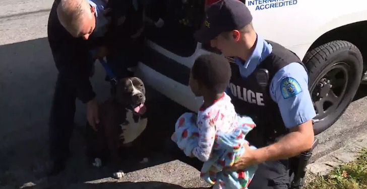 Captura de Pantalla 2020 10 05 a las 12.03.10 - Pitbull callejero protegió a niño perdido hasta ser rescatado. No se apartó de él ni un segundo
