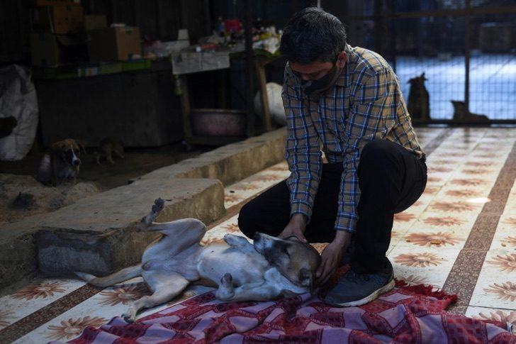 AFP5959733807262136325546473372999943722808 accident animal dog india society 4 - Callejera atropellada por el tren recibe prótesis y será adoptada en Gran Bretaña. Tendrá vida nueva