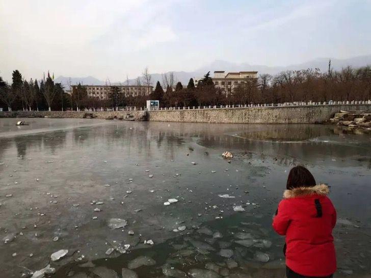 Captura de Pantalla 2020 12 29 a las 13.37.02 - Husky cayó en un lago congelado y aullaba por ayuda. Bomberos lo rescataron con un salvavidas