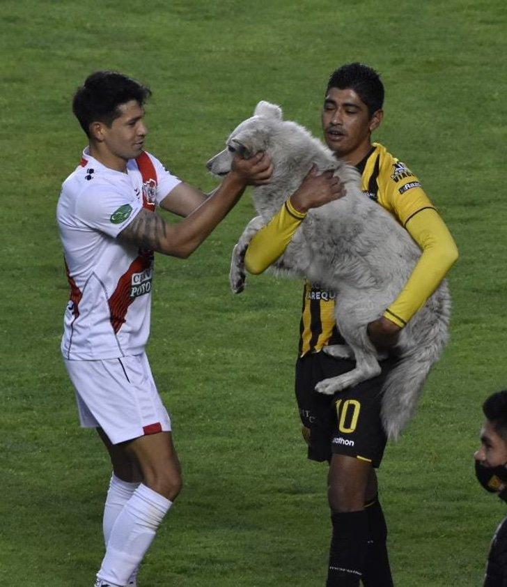 EqCbxmJXcAQk3 H - Perro que invadió una cancha fue adoptado por un futbolista en Bolivia. Le hizo un gol a su corazón