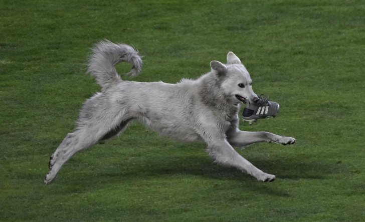 EqCbxmKW4AMsK9C - Perro que invadió una cancha fue adoptado por un futbolista en Bolivia. Le hizo un gol a su corazón
