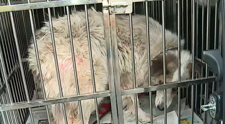 Captura de Pantalla 2021 01 06 a las 15.44.45 - Mujer intoxicó a sus vecinos con azufre al intentar echar a perrita callejera. Será adoptada