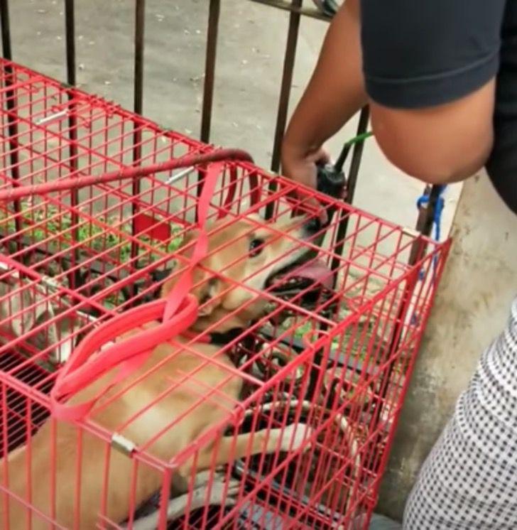 Captura de Pantalla 2021 01 22 a las 11.09.25 - Rescatan a perro que vivía en un espacio ínfimo y sucio del que siempre trataba de huir. Hoy brilla