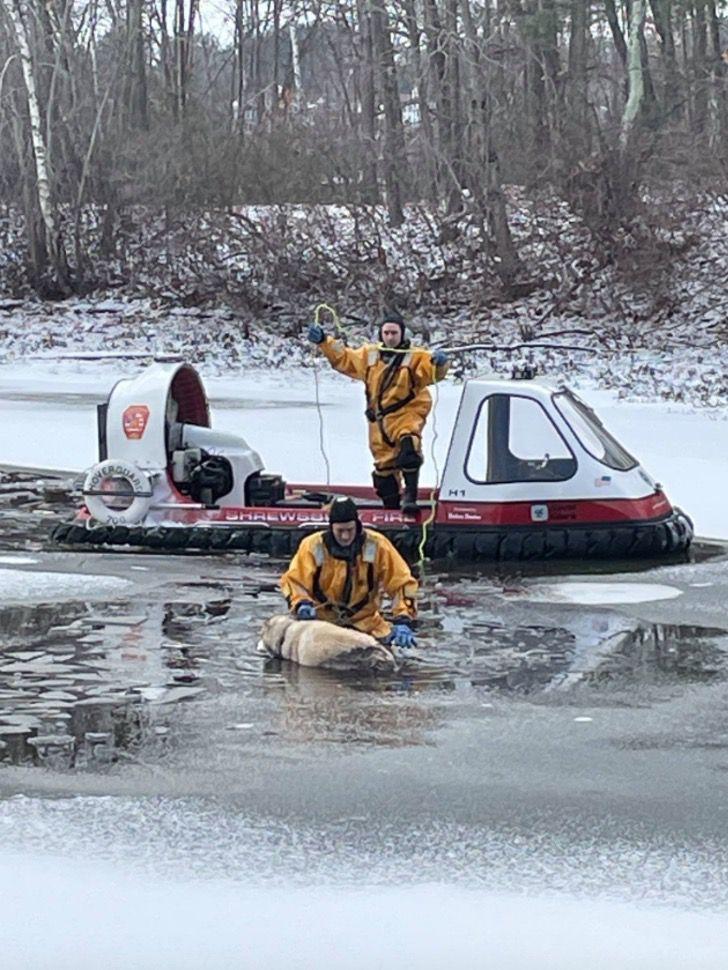 Captura de Pantalla 2021 01 27 a las 17.12.35 - Bomberos rescatan a perro que estaba inmóvil congelándose en un lago. Ya se había dado por vencido
