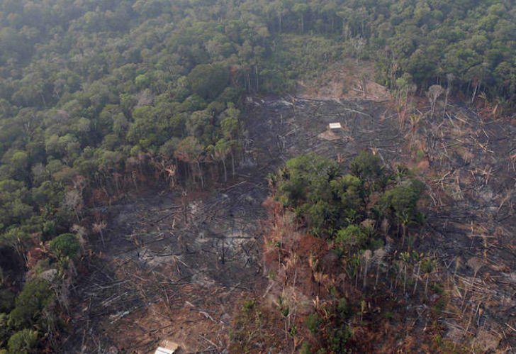Captura de Pantalla 2021 01 28 a las 18.12.34 - Declaran al delfín gris en peligro de extinción por la deforestación en el Amazonas. Dañan su hogar