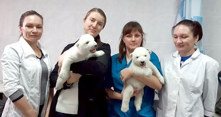 katy perry clubes0003 - Ositos polares abandonados por su madre son criados por mujeres. Les dan leche tibia y masajes