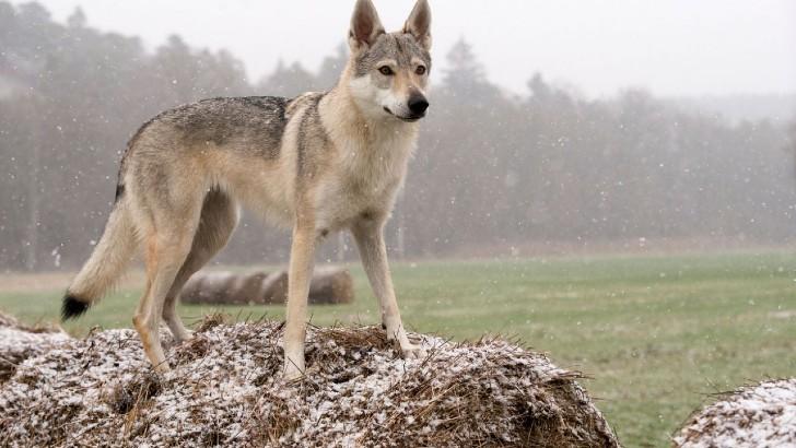 """perro turin 1 - """"Adoptemos esos perros"""": Petición pide salvar a canes acusados de asesinos. Merecen otra oportunidad"""