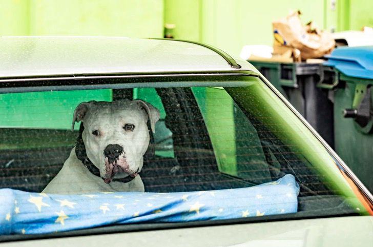 Captura de Pantalla 2021 03 01 a las 17.58.26 - Mujer irresponsable dejó a su perro dentro de un auto sin ventilación. Lo salvaron y la multaron