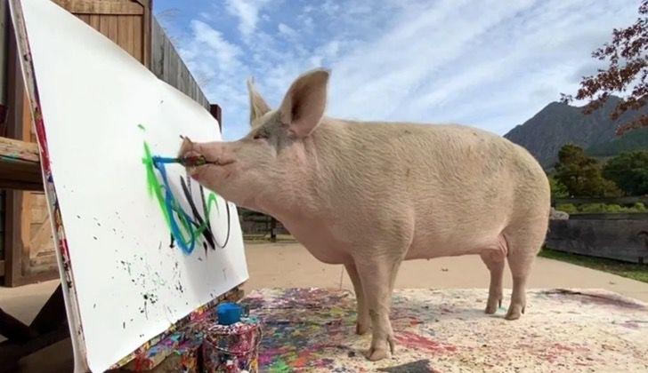 Captura de Pantalla 2021 03 24 a las 15.57.23 - Cerdita fue salvada de un matadero y se convirtió en una artista de la pintura. La llaman Pigcasso