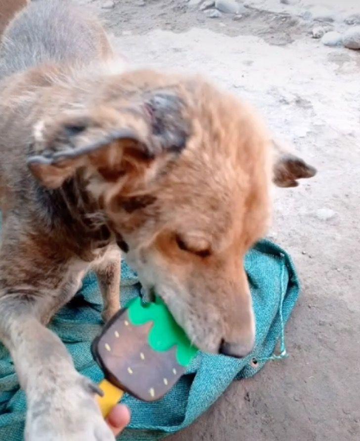Captura de Pantalla 2021 04 06 a las 17.31.58 - Perdió su pelaje y dormía enrollado en la calle, hasta que lo rescataron. Se recuperó y ya sonríe