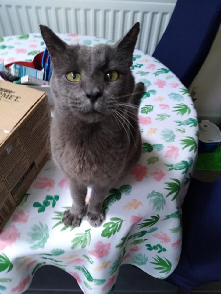 SEI 87188644 - Mujer dejó su importante cargo en una empresa para cuidar a sus 150 gatos. Ellos son su prioridad