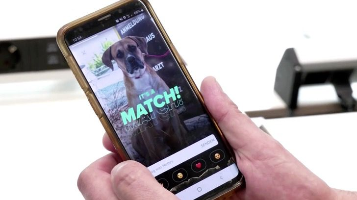 Captura de Pantalla 2021 08 13 a las 14.47.21 - Refugio abrió perfiles en Tinder para sus mascotas y ya tienen sus citas. Esperan que sean adoptados
