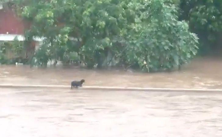 Captura de Pantalla 2021 08 31 a las 17.11.26 - Perrito sobrevivió luego de ser arrastrado por la corriente en Mazatlán. Huracán Nora causa estragos
