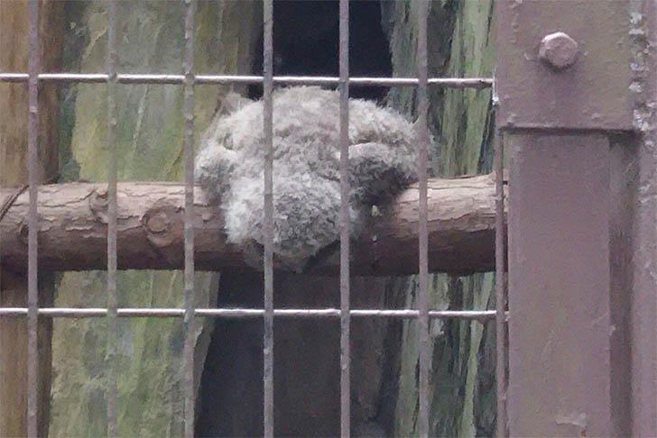 buhos bebes durmiendo020 - ¿Qué le pasó? 20 fotografías de búhos bebés durmiendo boca abajo. Como tú después de una fiesta
