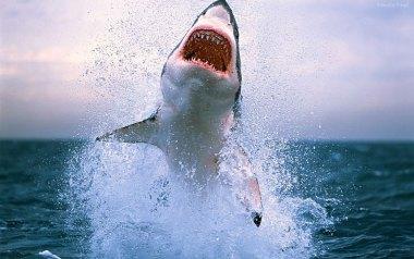 Resultat d'imatges de tiburón