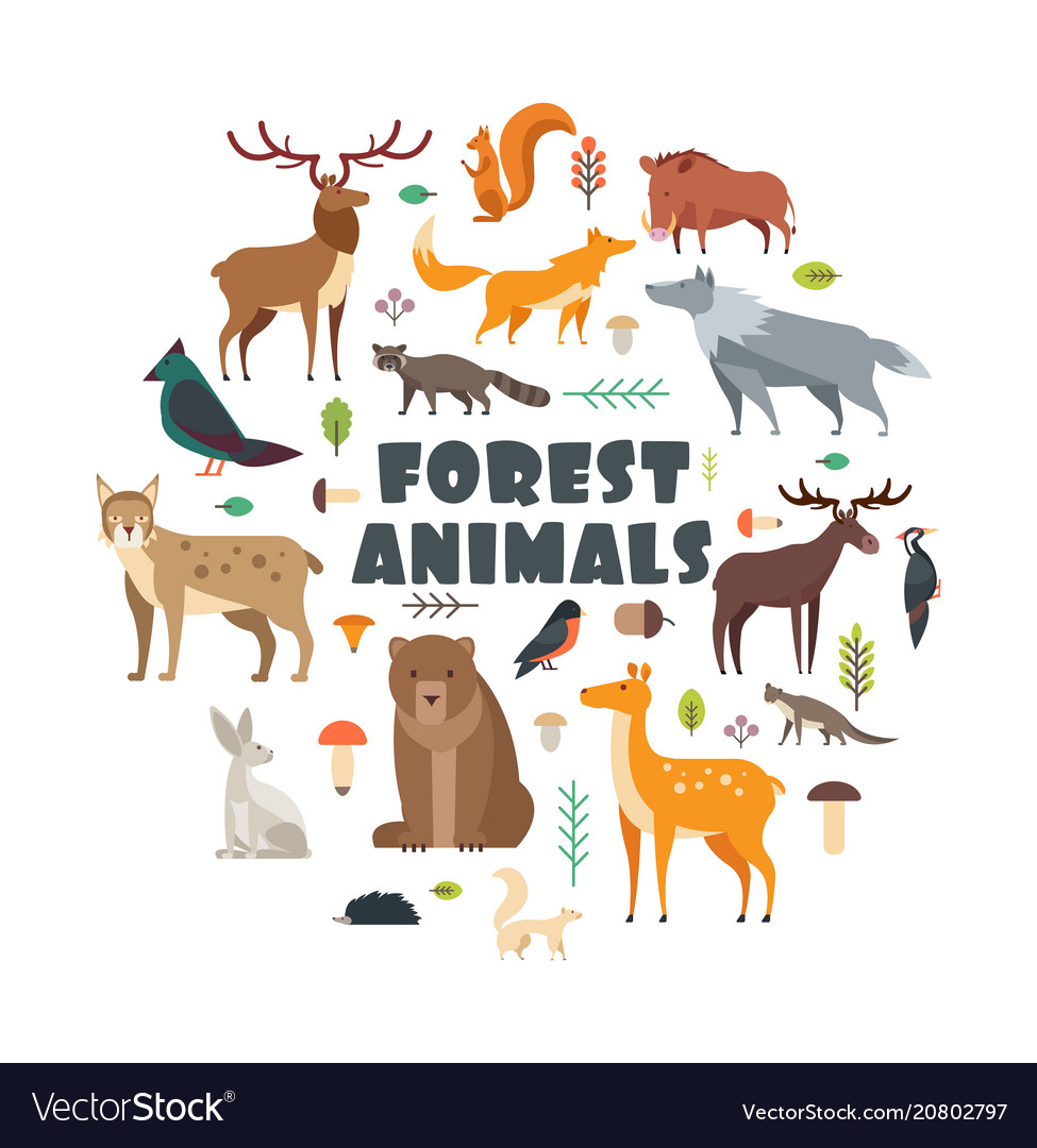 birds are essential components of forest ecosystems. Wild Forest Animals And Birds Arranged In Circle Vector Image