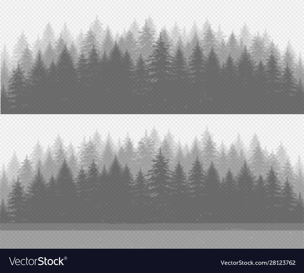 However, those roughly 200 species in pinaceae include not. Coniferous Pine Forest With Fir Trees Transparent Vector Image