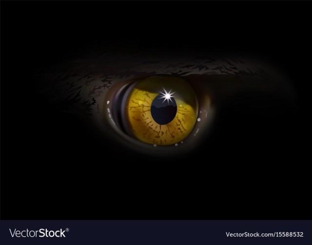 Eagle Eye Macro Vector Image