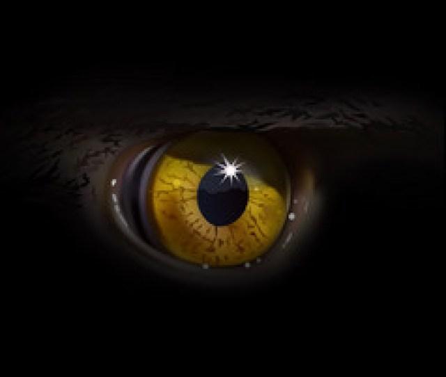 Eagle Eye Macro Vector
