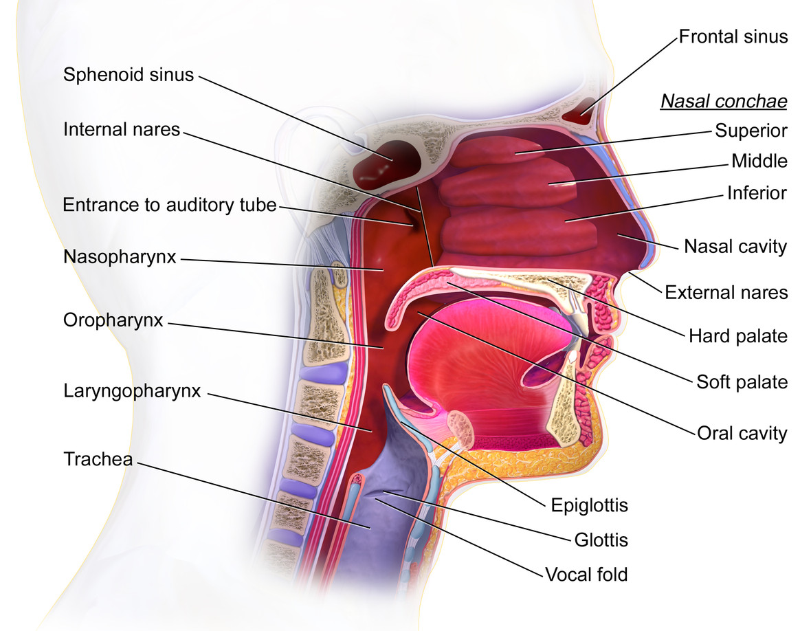 Syndrome Upper Airway Throat Cough