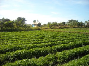 Vegetable  Farm  -  Plants  -  Farming  -  Agriculture