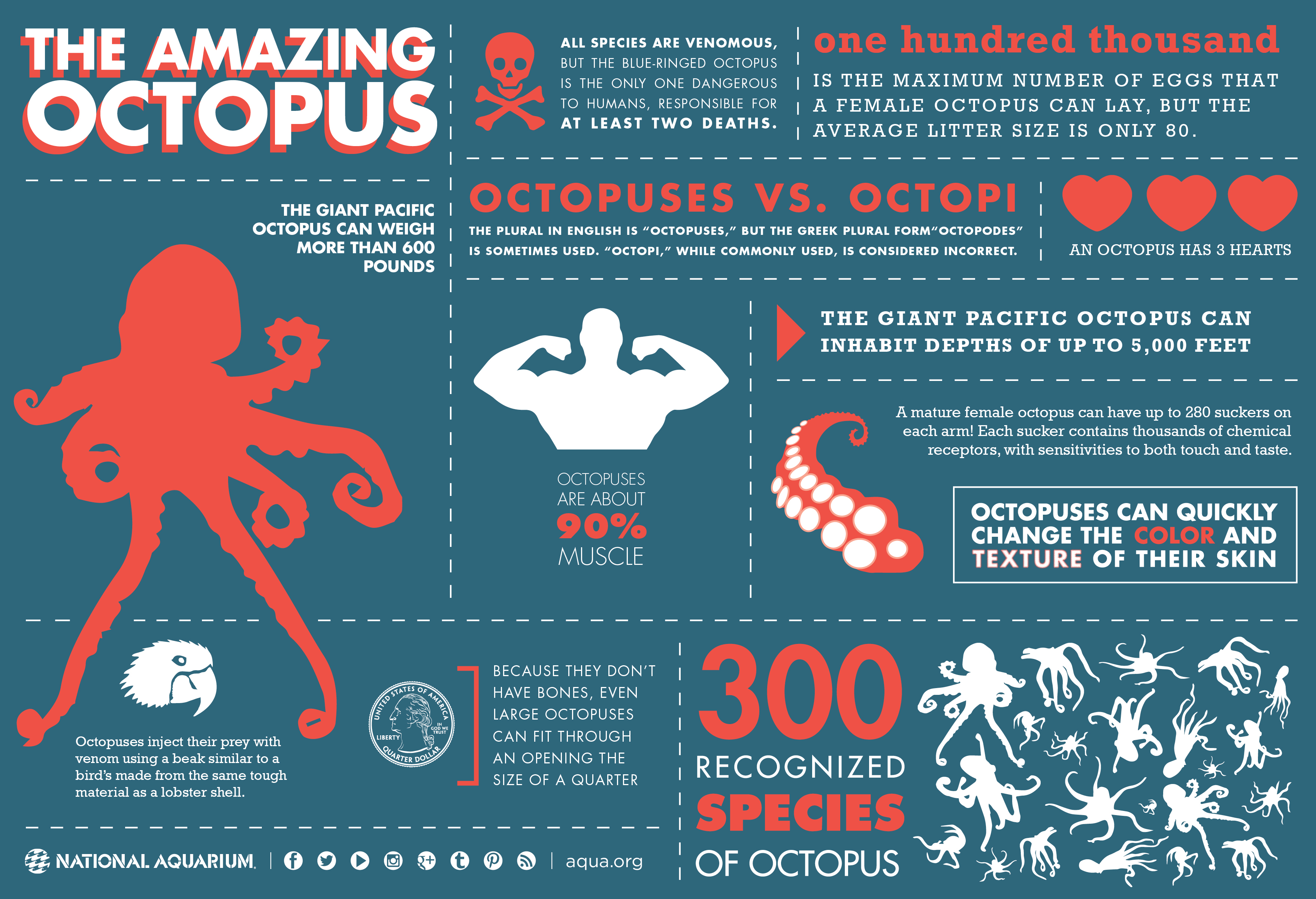 Light Sensitive Proteins Enable Octopuses To See With Their Skin Kids News Article