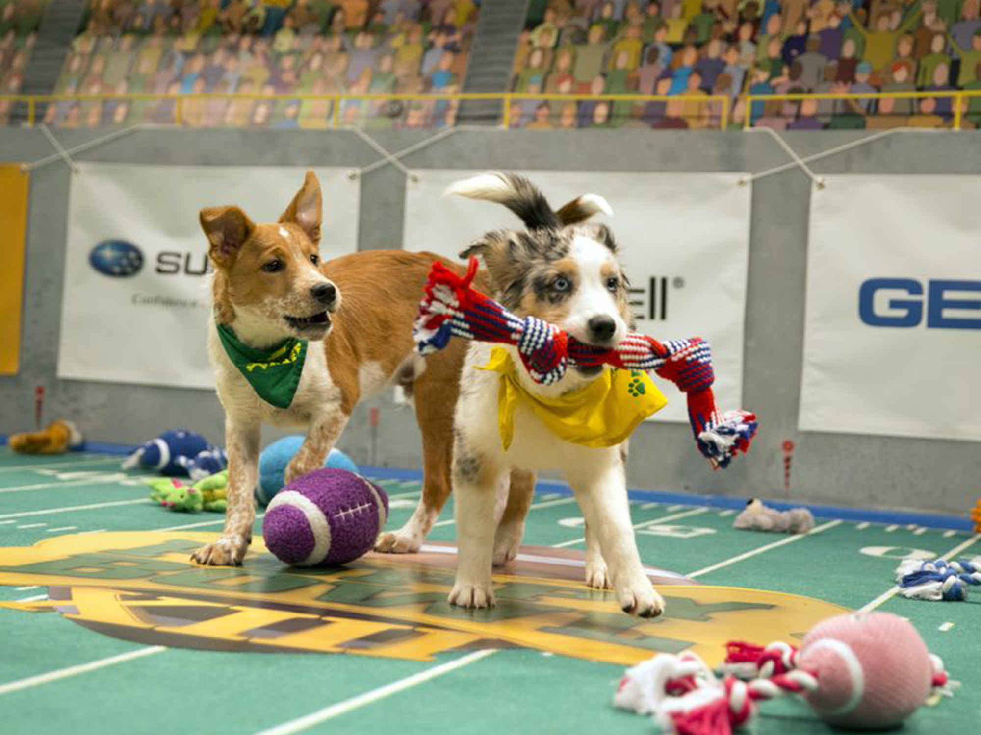 It S Super Bowl Sunday Are You Ready For Some Puppy Bowl
