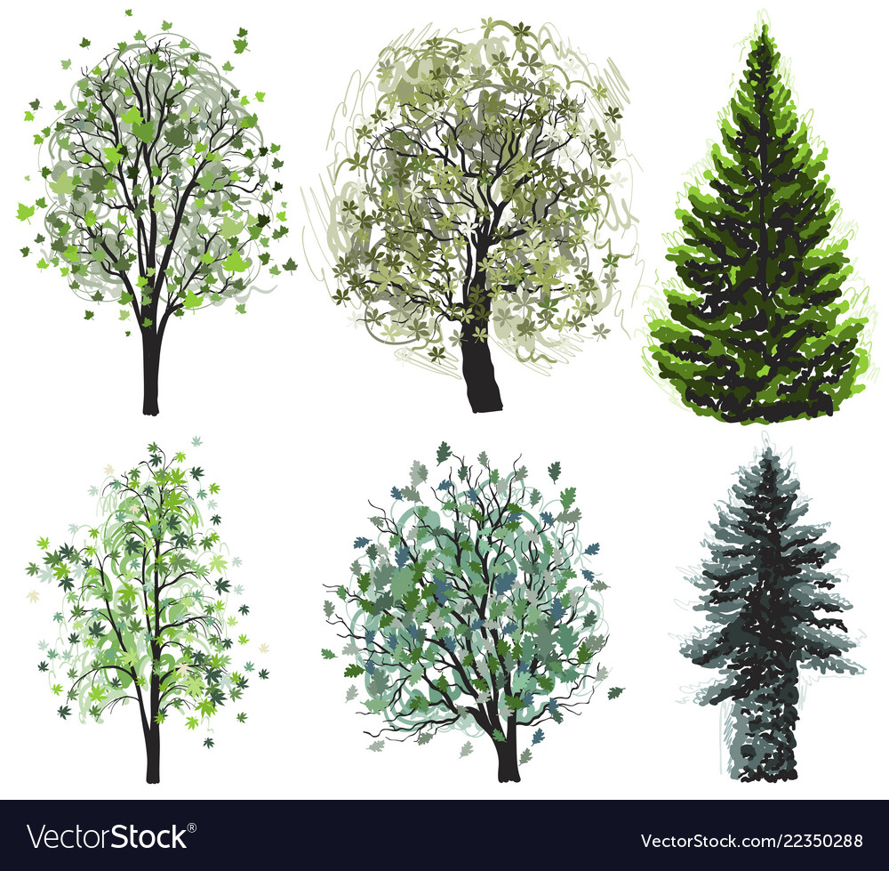 trees can be grouped as:deciduous or conifers 3. Deciduous And Coniferous Green Trees Set Vector Image