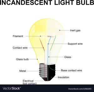 Parts of a modern incandescent light bulb Vector Image
