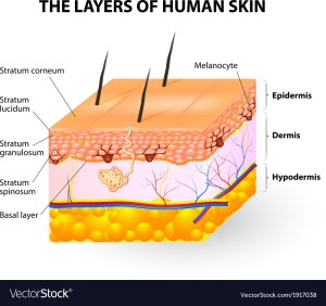 Melanocyte and melanin Royalty Free Vector Image