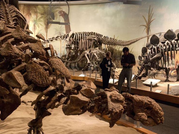 dinosaur fossil museum