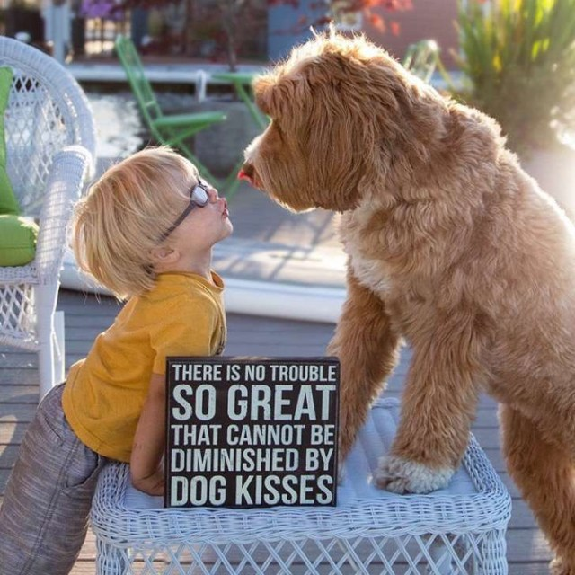 foster-child-labradoodle-dog-book-buddy-reagan-5-2