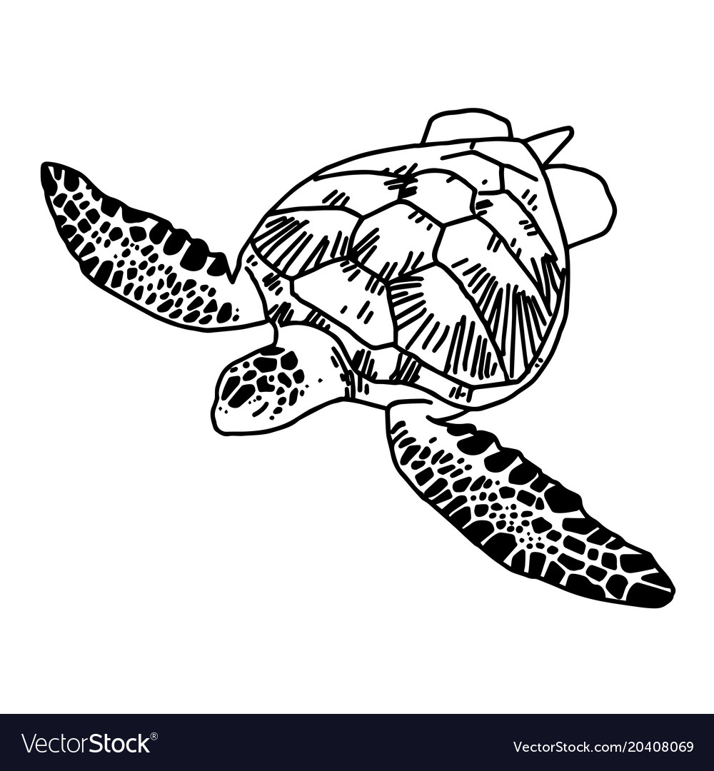 Hand Draw Sea Turtle Royalty Free Vector Image