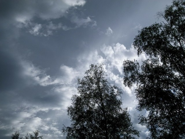 An image of dark clouds behind some trees.