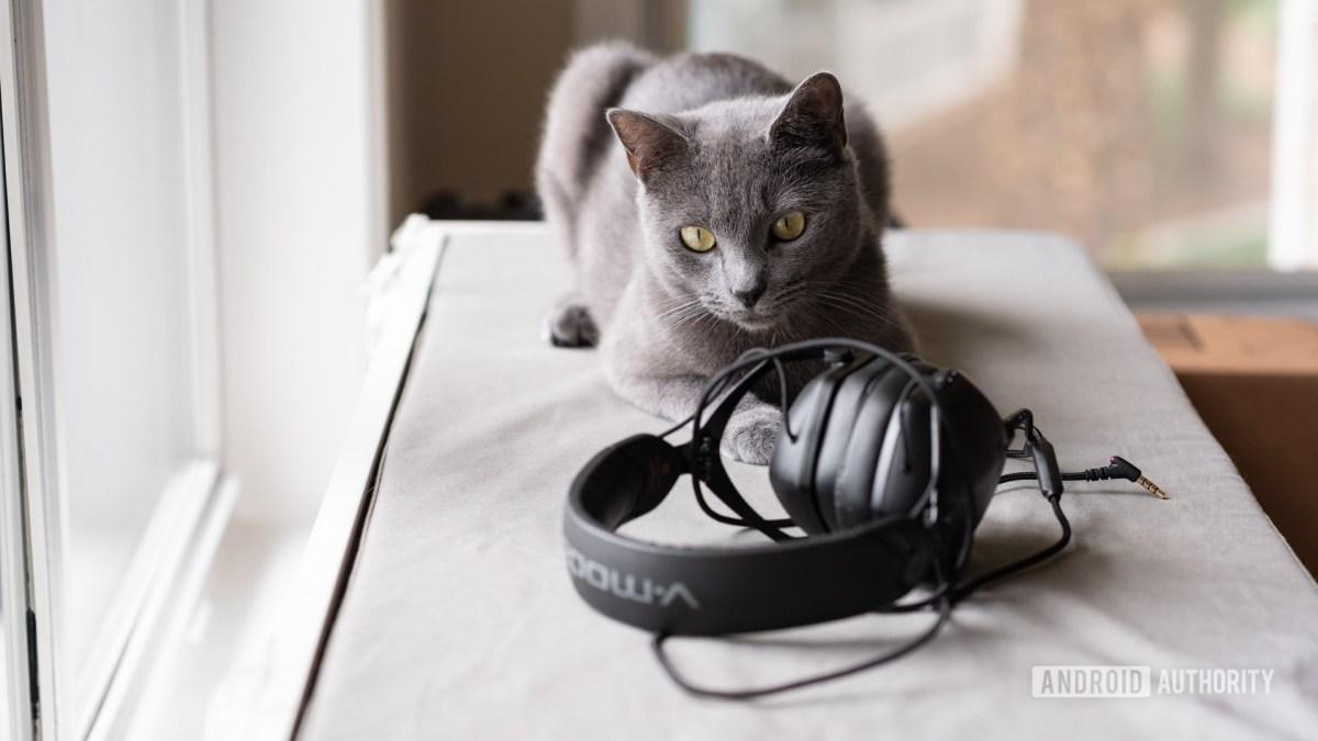 Кошка смотрит на пару наушников V-Moda.