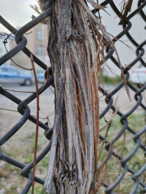 Realme X3 Superzoom макро фотография древесных волокон