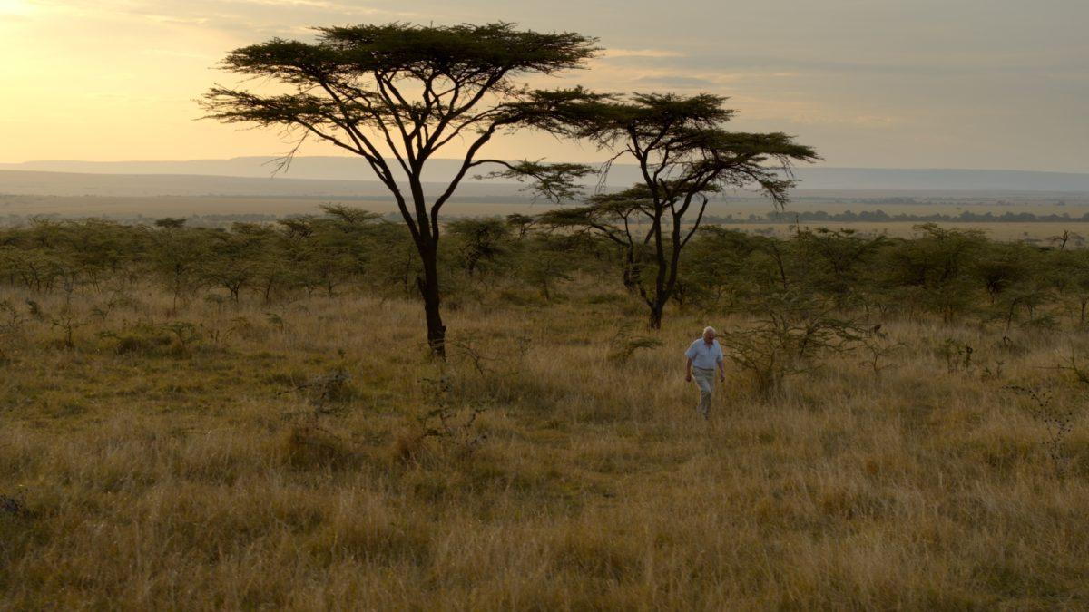 David Attenborough A Life on Our Planet - melhor programa de TV 2020