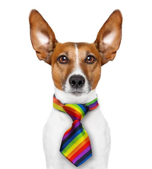Mini Rainbow Pet Tie Dogs Cats LGBT Gay And Lesbian