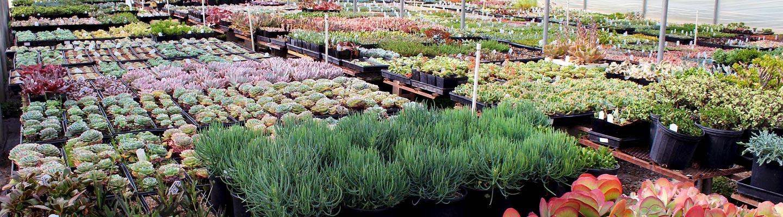 mountain crest gardens greenhouse