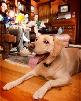 garmin-barklimiter-librarydog.jpg