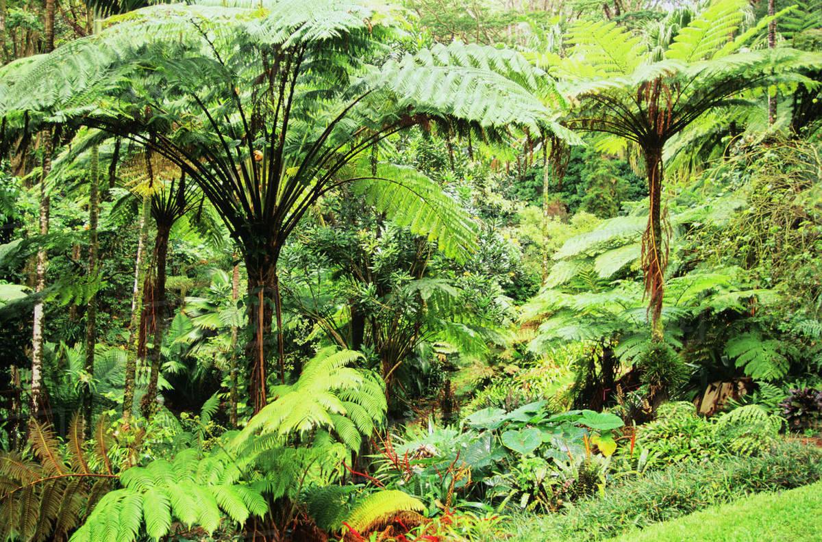 Usa Abundant Plant Life Hawaii View Of Very Green Full
