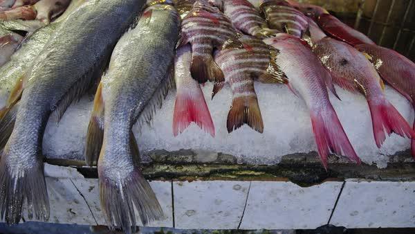 Resultado de imagen para mazatlan seafood images