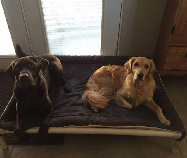 Dogs On A Kuranda Bed With Smoke Reverisble Fleece