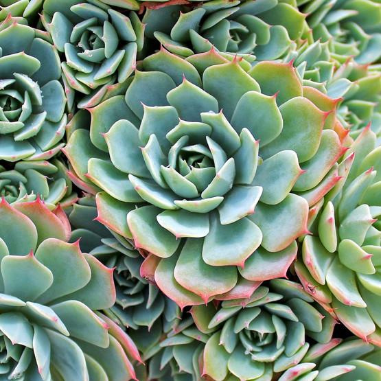 Miniature Cactus Plants Sale