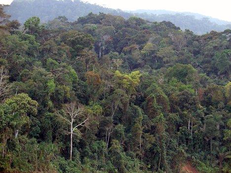 Amazon Rainforest, seen from the Alto Madre de Dios river, in Peru